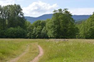 Oberhaslach_vallée Hasel