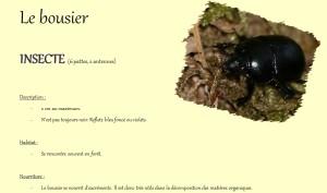 bousier