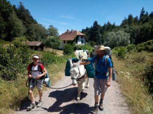Randonnée itinérante avec les ânes